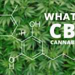 What Is Cannabidiol