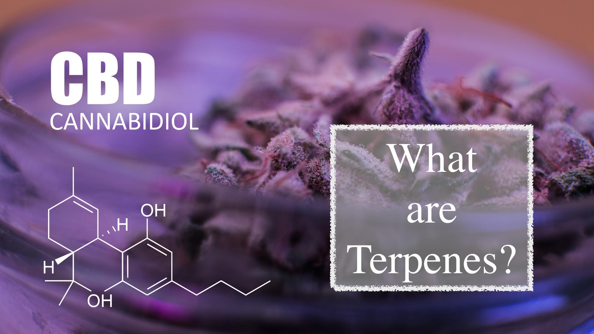 Terpenes In CBD Flowers